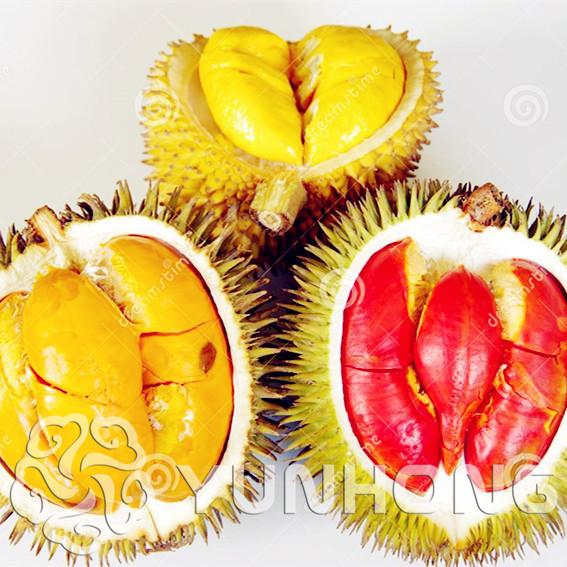 Comparer Les Prix Sur Durian Plant Online Shopping Acheter Prix Bas Durian Plant Au Prix D