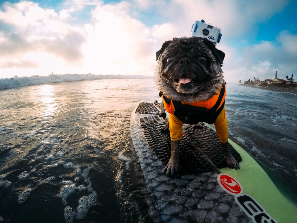 GoPro Accessories Adjustable Dog Fetch Harness Chest Strap Belt Mount Tripods For GoPro Hero 4 3+ xiaomi yi Sport Camera GP197