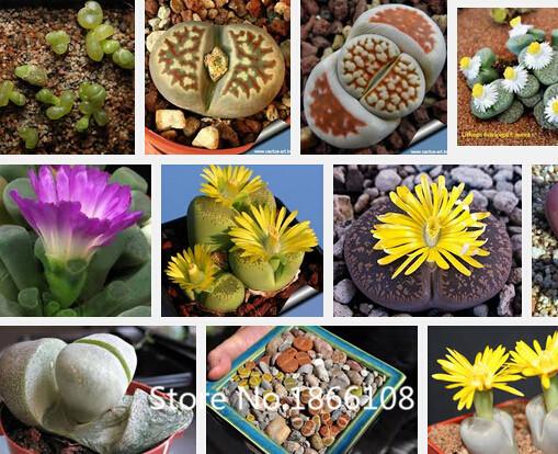 Popular Bulk Garden Seed Buy Cheap Bulk Garden Seed lots from