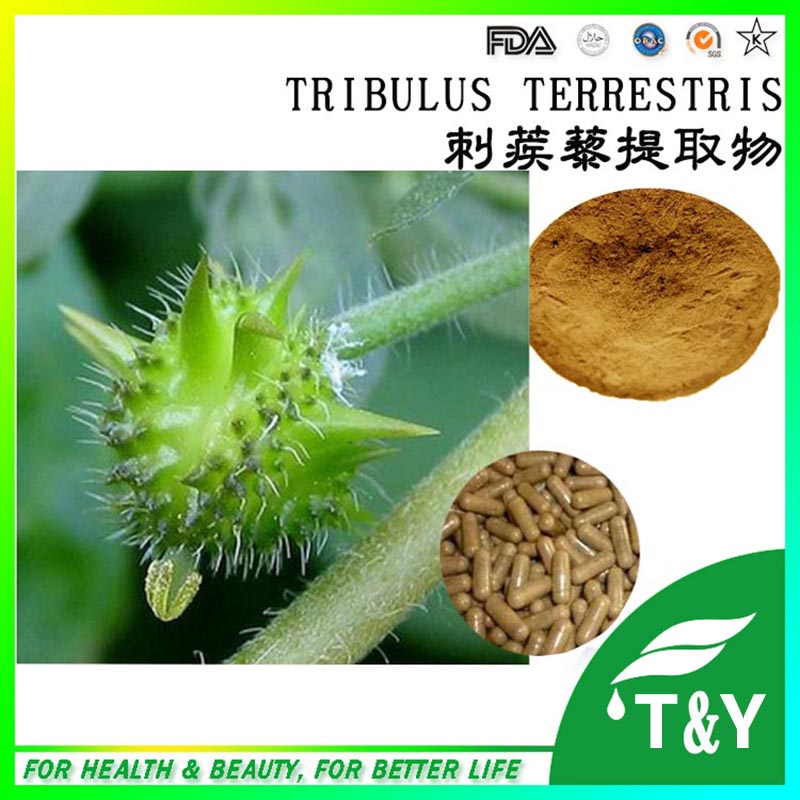 13 years GMP factory supply organic tribulus terrestris extract for sale 1000G/LOT<br><br>Aliexpress