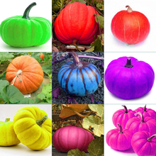 1bag=50pc Grade AAAAA  9 kind of color rare Pumpkin seeds Outdoor Garden bonsai Vegetable Seeds child gift  free shipping(China (Mainland))