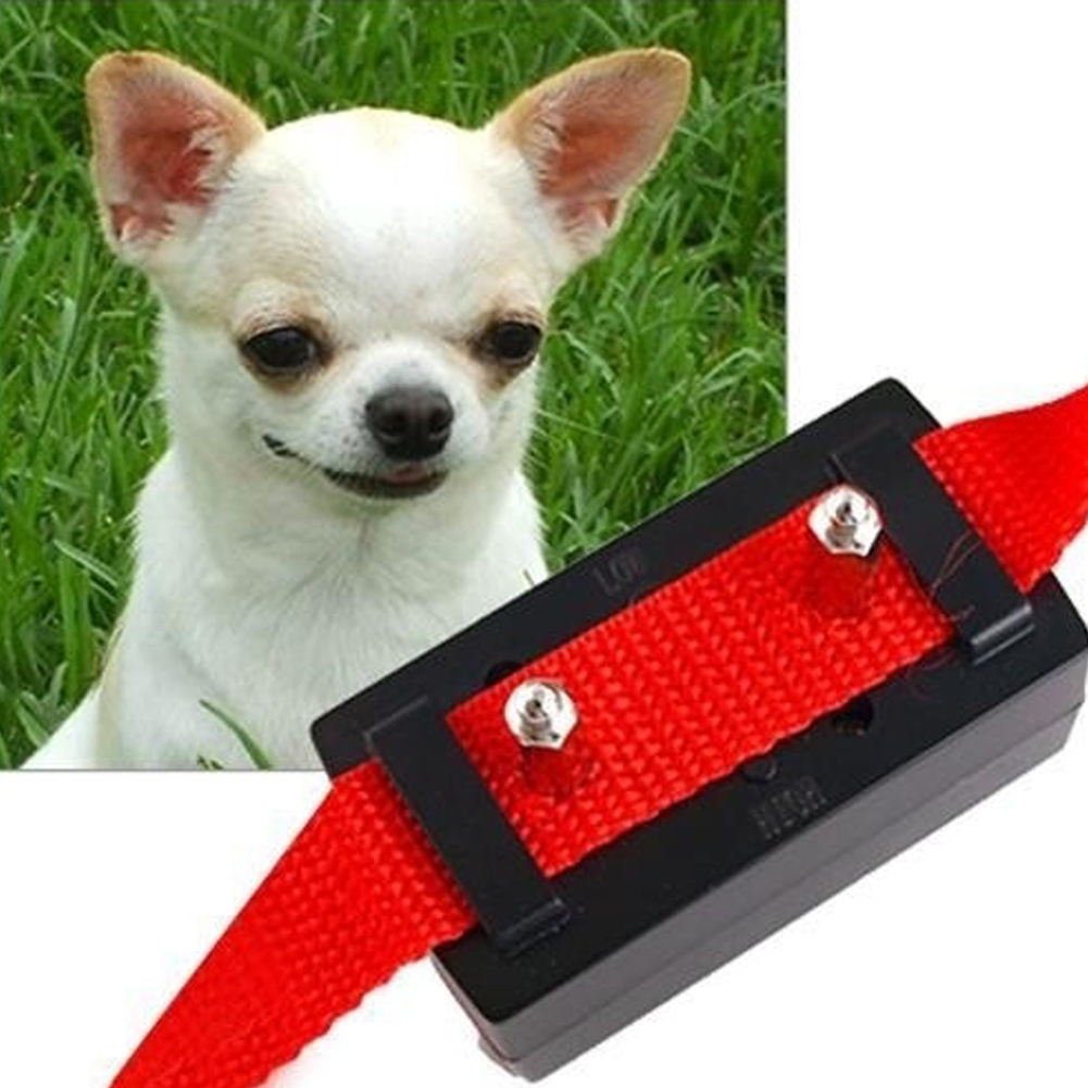 Citronella Collar For Dogs Petsmart