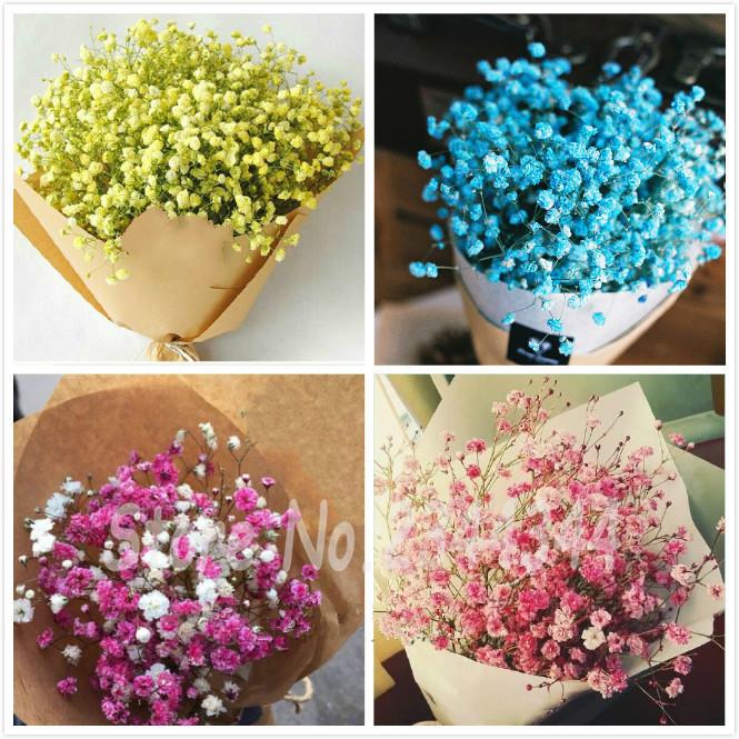 100 pcs/bag Bonsai graines de fleurs rares Gypsophila Seeds (Baby's Breath) DIY indoor plants flowers Easy-growing Cut Flower(China (Mainland))