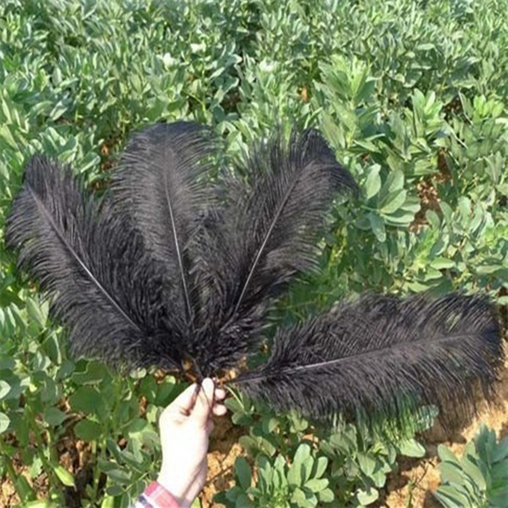 Free Shipping 5pcs/lot 15-20cm(6-8In)  Black Ostrich Feathers Craft Party Christmas Holiday Feather  Home Decor Product Gift(China (Mainland))