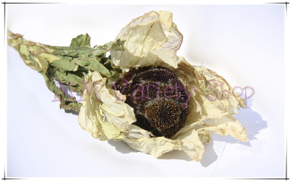 100 g Free Shipping Chinese Herbs,herbal Tea,health Tea,herbal Medicines,Xue Lian Hua,Herba Saussureae Involucratae,Snow Lotus(China (Mainland))