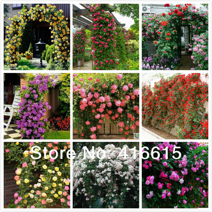 450 Pcs Climbing Roses Seeds,Climbing Plants ,Chinese Flower Seeds ,9 Species Variety, Each Of Variety 50 Pieces,+ Gift(China (Mainland))