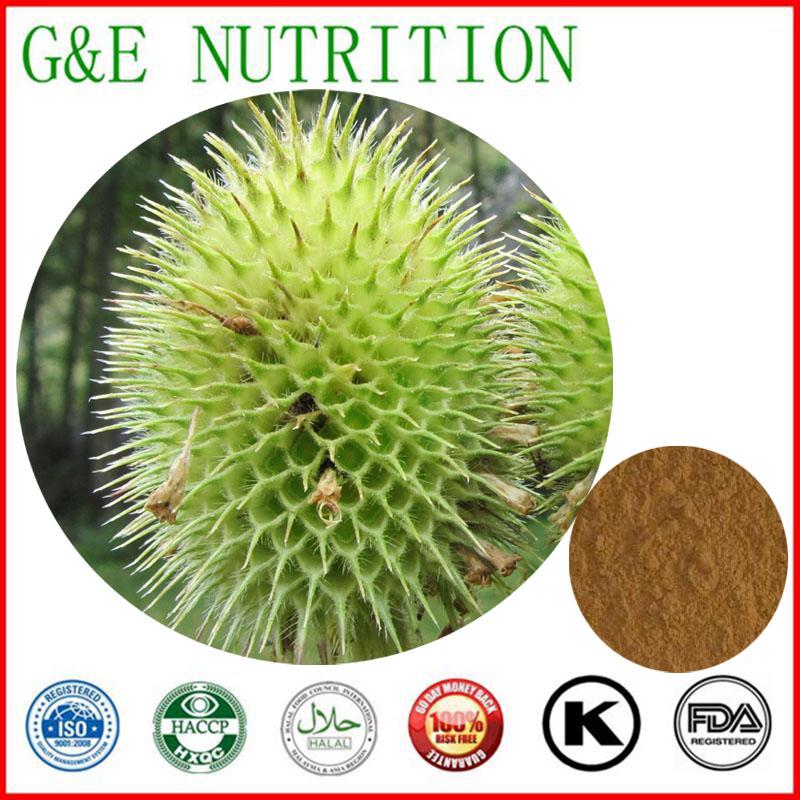 600g Pure Teasel/ Dipsacus asperoides/ Radix Dipsaci/ Himalayan teasel Extract with free shipping