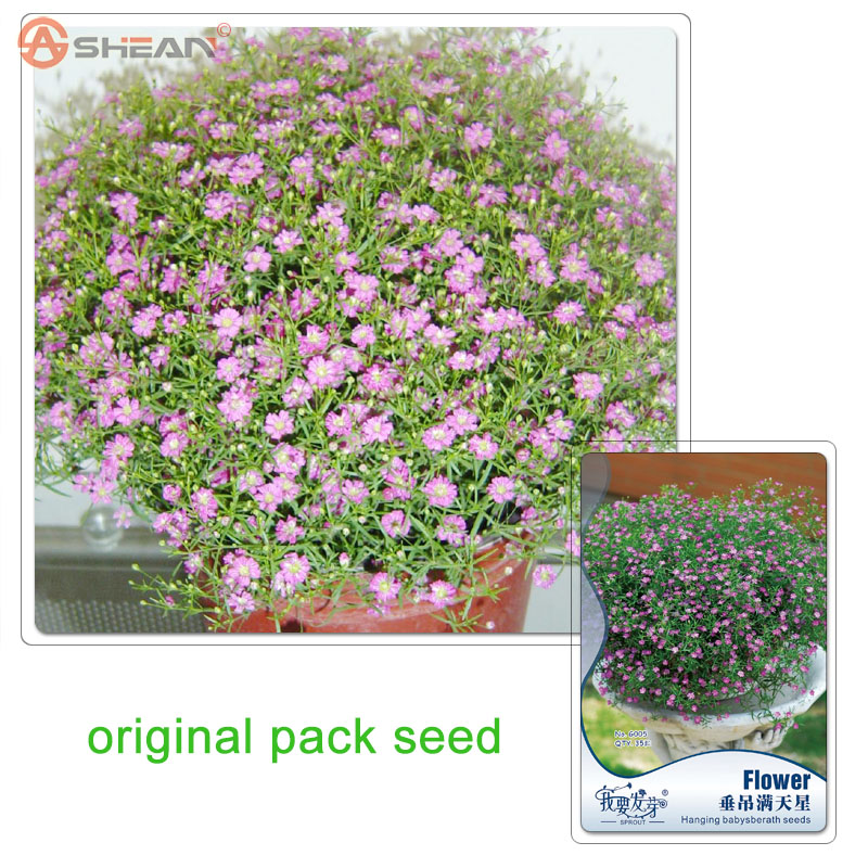 35 Particles / Bag Original Packaging Pink Starry Flower Seeds Potted Flowers Potted Plants Balcony Hanging Babysberath Seeds(China (Mainland))