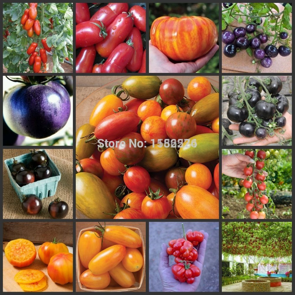 Special Offer Top Fashion Sementes Seeds 100+ High Yield Italian Tree Tomato 'trip L Crop' Seeds Bonsai Fruit Vegetable(China (Mainland))