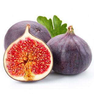 1 Original Pack 6 Seeds Pack Common Fig Seeds Rare Purple