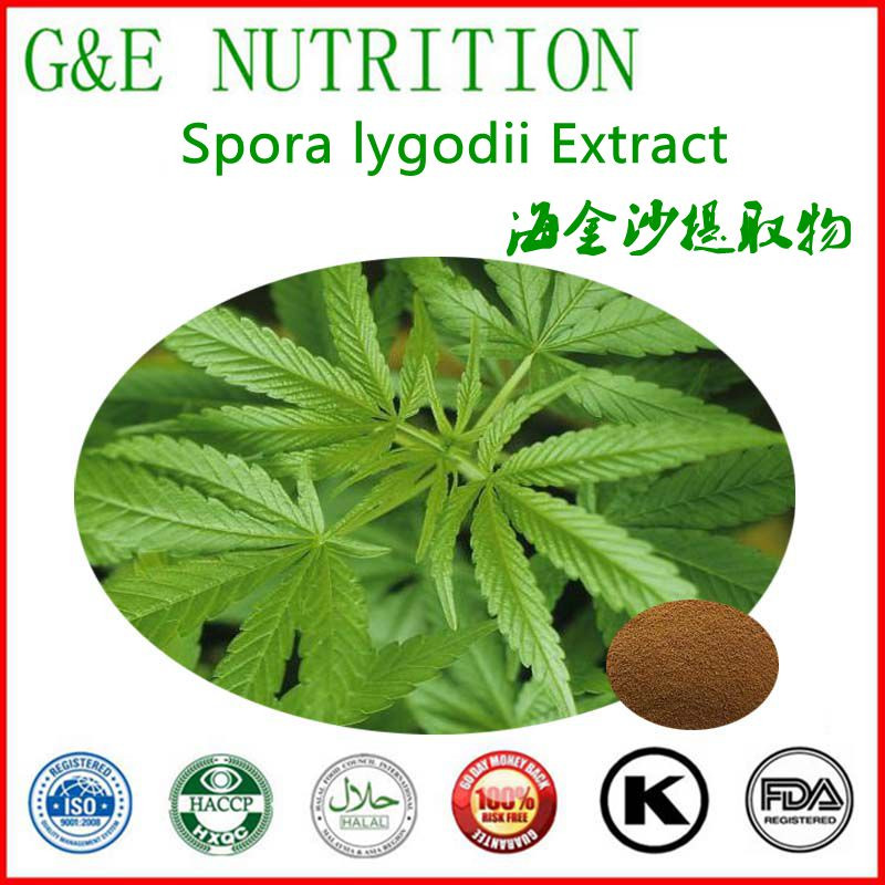 Chinese herbal natural plant  Spora lygodii Extract  with free shipping 900g