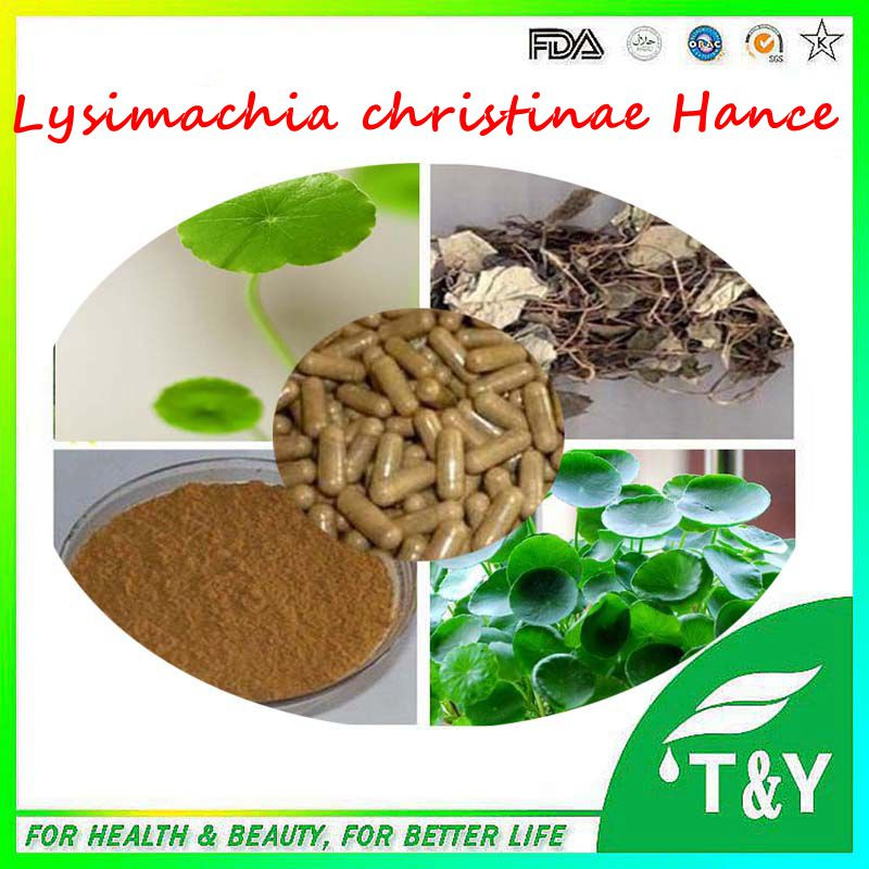 Professional factory supply Lysimachia Christinae Hance Extract Capsule 500mg*600pcs
