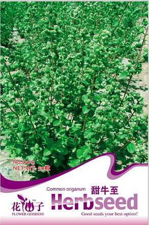 product Seeds of sweet spices herbs oreganowild Mayue Lan(Origanum)get rid of aphids cooking foodabout 50 particles / pack