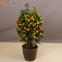 100pcs Edible Fruit Mandarin Indoor Bonsai Tree Seeds Citrus Bonsai Mandarin Orange Seeds(China (Mainland))
