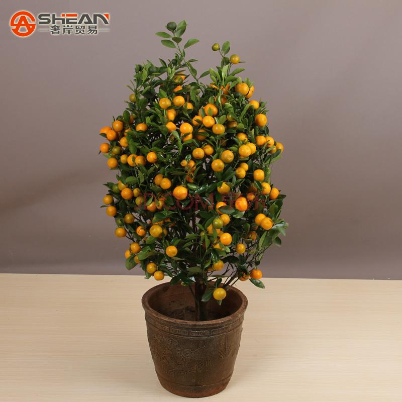 100pcs Edible Fruit Mandarin Bonsai Tree Seeds Citrus Bonsai Mandarin Orange Seeds(China (Mainland))