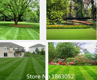 Lawn Turf Seed 500pcs Grass Seeds Fresh Green Soft Runner Turfgrass for home park soccer golf place free shipping Flower Seeds F(China (Mainland))