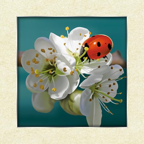Escarabajo flor pet Lenticular 3D insectos casa cartel Wall Art Decor(China (Mainland))