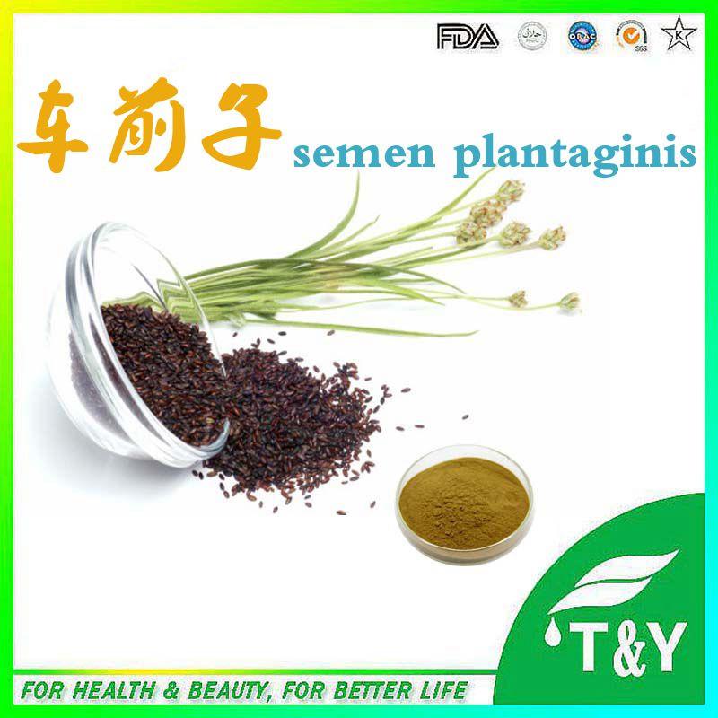 Semen Plantaginis Extract,Semen Plantaginis Powder Extract,Semen Plantaginis P.E.