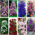 To get coupon of Aliexpress seller $3 from $9 - shop: Best Chinese Seeds in the category Home & Garden