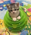 Fashion Puppy Cat Toy Pet Products Intellectual Toys For Kitten Cats Cat Toys Funny Disk Pet