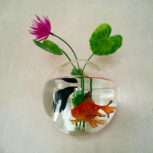 set of 5 morden style 4 inch glass wall fish tank wall planter vase for house