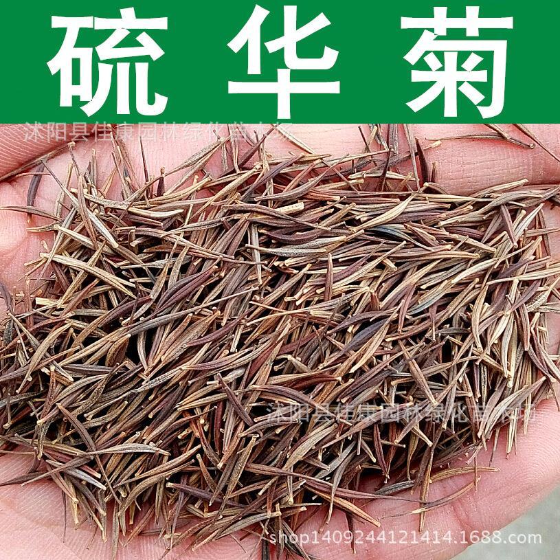 product   yellow daiy  ulfur como Huangqiu Ying Huang yellow hibicu   seeds 220g