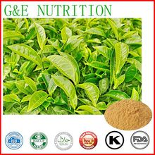 Buy 100% Natural Green Tea Extract 10:1 HPLC for $16.52 in AliExpress store
