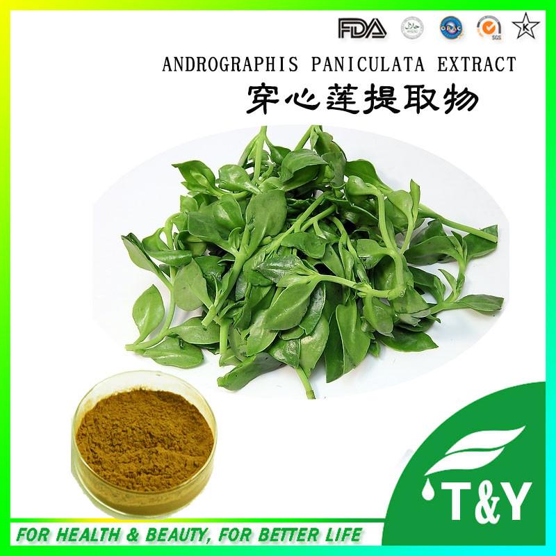 Hot sale natrual andrographis paniculata extract/ andrographis extract powder Andrographolide 10% 500g