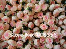 peony flowers promotion
