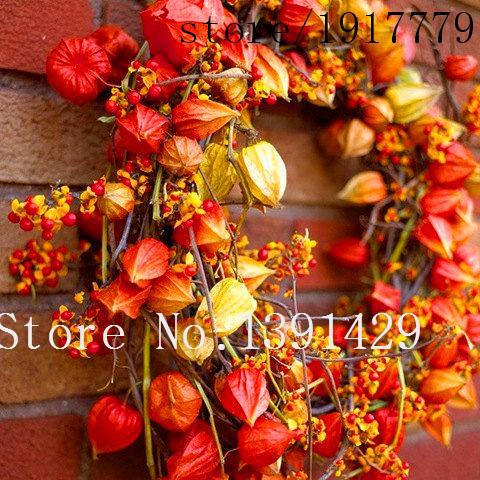 Heirloom 100 Seeds Physalis American Lanterns Winter cherry Husk tomato Orange red Gooseberries Ground family cherries Flower(China (Mainland))