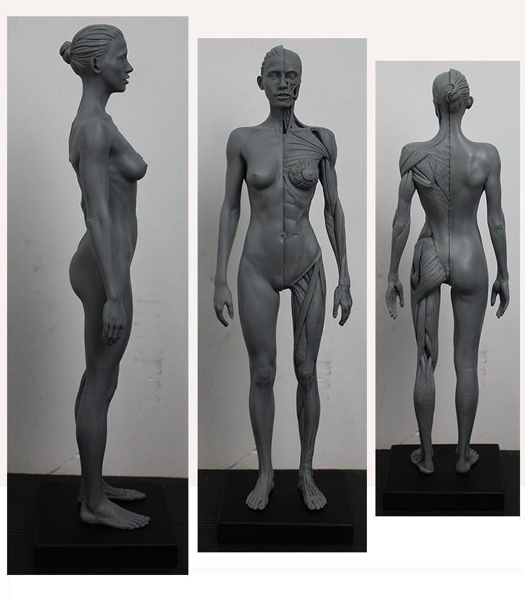 анатомические фото женских органов