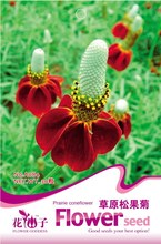 Buy Ratibida Columnifera Upright Prairie Coneflower Flower Seeds, Original Pack, 30 Seeds / Pack, Beautiful Mexican Hat for $1.09 in AliExpress store