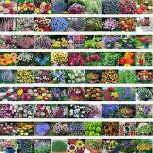 mixed 200 seeds/pack Spring and autumn of the four seasons flower seeds the letoff bundle bag flower seeds(China (Mainland))