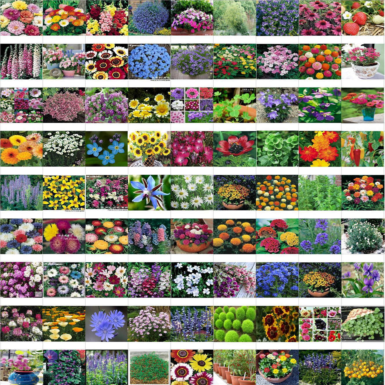 mixed 100 seeds/pack Spring and autumn of the four seasons flower seeds the letoff bundle bag flower seeds(China (Mainland))