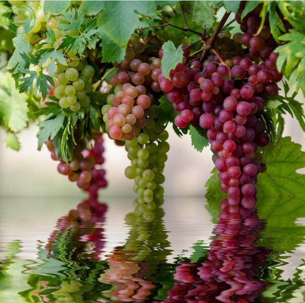 En macetas de rboles frutales compra lotes baratos de - Tiestos de plastico baratos ...