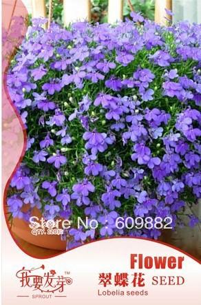 Карликовое дерево 360 карликовое дерево china seeds dionaea muscipula
