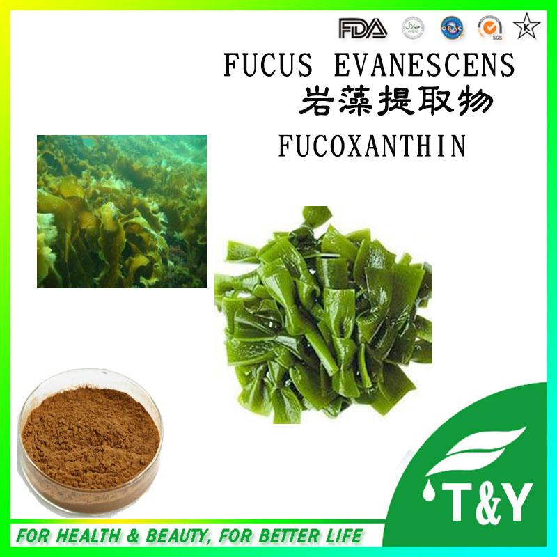 Premium 100% fucoxanthin (extract from wakame) fucoxanthine price 700g/lot