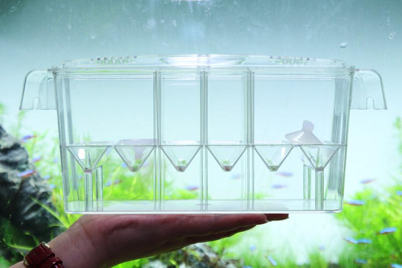 Acuario de cr a caja al por mayor de alta calidad de china for Cria de peces en casa