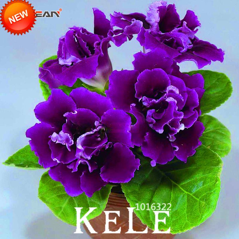 Viola fiori perenni acquista a poco prezzo viola fiori for Piante a poco prezzo