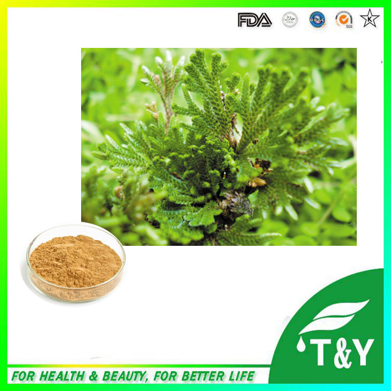 high quality amentoflavone powder selaginella tamariscina extract 300g/lot<br><br>Aliexpress