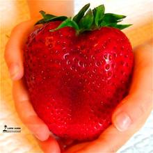 1000 Giant Strawberry Seeds,Rare,Big as a Peach,very delicious Fruit Strawberry fruit seeds for home garden(China (Mainland))