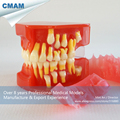 CMAM DH503 9 to 12 Years Graghically Demonstrate Developing Model