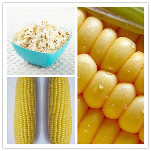 high quality Corn seeds, popcorn, popcorn special corn Sementes bonsai seeds for home plant - 10 particles/bag(China (Mainland))