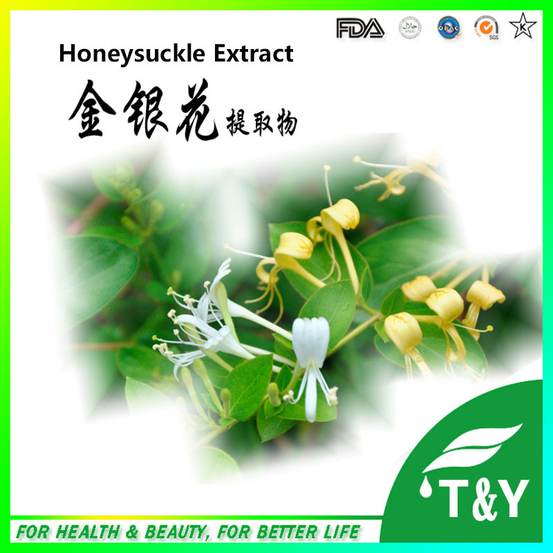 ISO&amp;GMP factory Chlorogenic Acid powder from Honeysuckle <br><br>Aliexpress