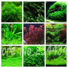 New 500/1000 Pcs Aquarium Grass Seeds (Mix) Water Aquatic Plant Seeds Decoration Ornament Plantas Raras Cheap Aquarium Fish(China (Mainland))