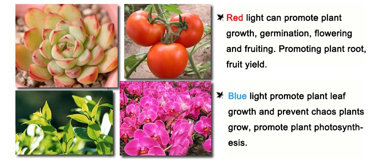 4pcs Wholesale Full Spectrum 1200W Double Chip LED Grow Light Red Blue  White UV IR For hydroponics and indoor plants BJ - us317