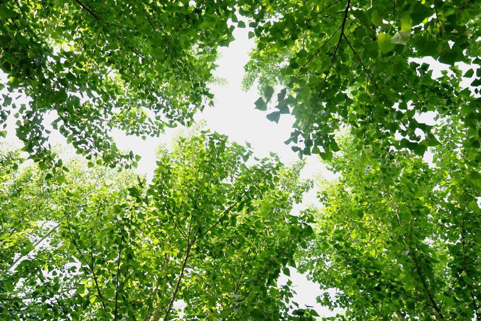 Bamboe Behang Slaapkamer: Koop laag geprijsde dutch set partijen ...