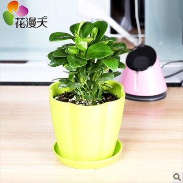 Buy Office Desk Flowers Small Potted