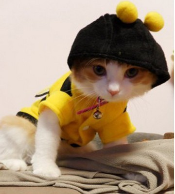 Hot Sales clothing for Cats Dog Pet Shop gatos cat clothes roupa para gato pra cachorro cachorro shirt animals costume(China (Mainland))