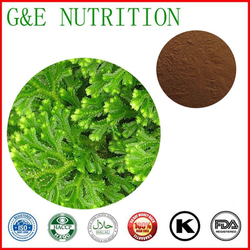 600g Pure Selaginella tamariscina/ Tamariskoid Spikemoss Herb/ Herba Selaginellae Extract with free shipping<br><br>Aliexpress